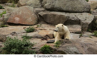 Big white bear - Shot of Big white bear