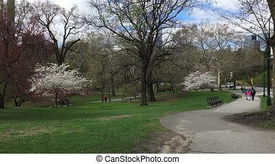 Shot of Central Park NY