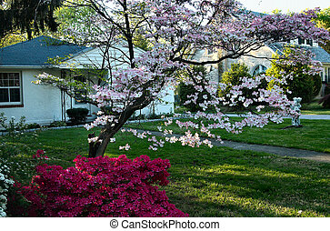 shot of country cottages and spring foilage colors in rural setting