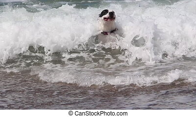 dog in the ocean