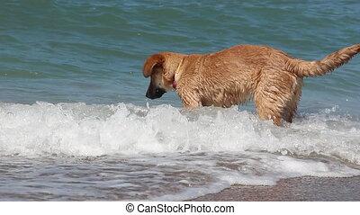 dog play on the beach