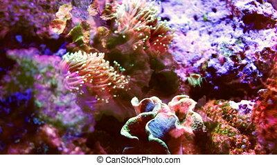 shot of fish in an aquarium