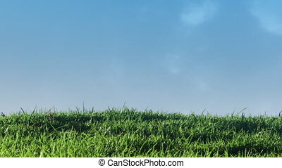 Shot of green field background