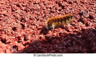Macro shot of silkworm