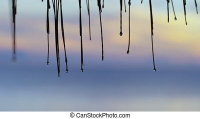 Shot of mini bamboos - A medium shot of the mini bamboos...