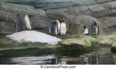 Shot of Penguins at Berlin zoo