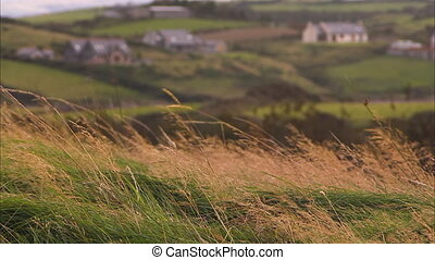 Shot of tall grass with hills and houses - Shot of green and...
