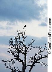 bird on the rampike