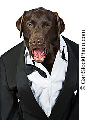 Top Dog in Tuxedo