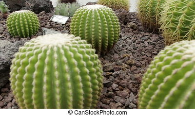 Travel shot of Cactus growing in a greenhouse - Shot of...