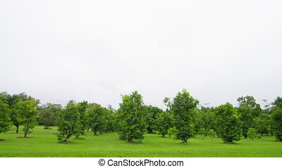 Shot of trees and grassy land - A wide shot of trees. Shot...