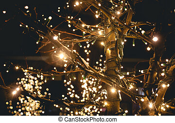 shot of trees on street decorated with lights - outdoor shot...