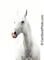 white horse - shot of white horse in a high key