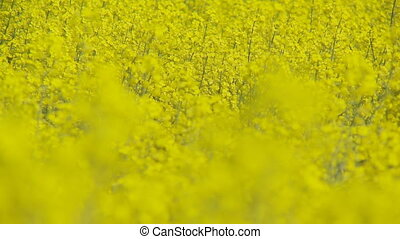 shot transition colorful rapefield close 1