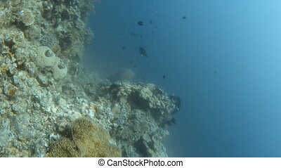 Shots of coral reef, fish and a scuba diver