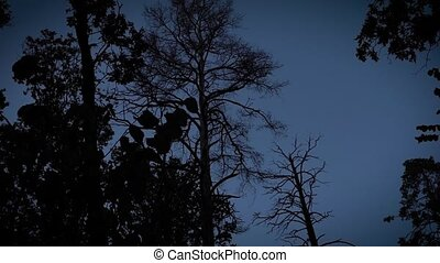 Shots of creepy forest at night