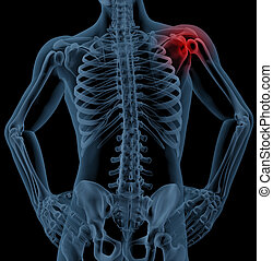 Shoulder pain - 3D render of a medical skeleton with the ...