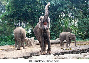 Shouting elephant