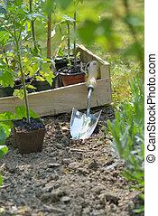 shovel in garden to planting vegetable plant in garden