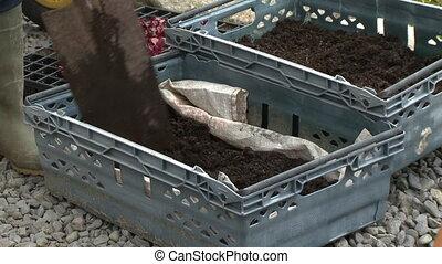 Shovelling soil into a plastic tub