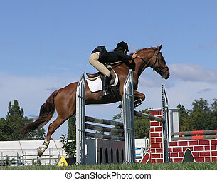 Show Jumper - A horse clearing a jump at the Horse of the...