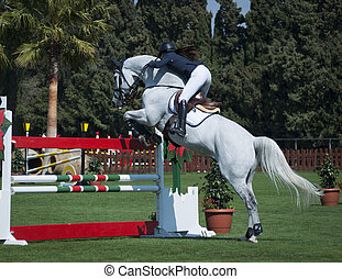 A show jumping horse and rider jumping a fence.