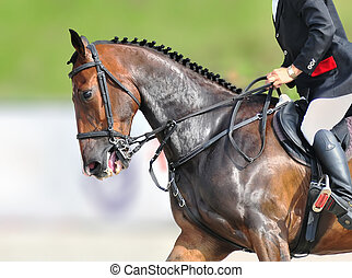 A close-up of beautiful jumping bay horse during the show jumping test.