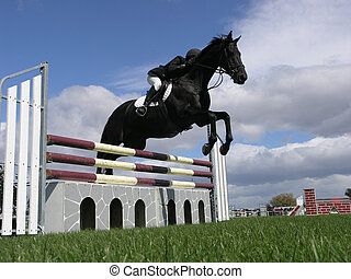 Show Jumping - A horse clearing a jump. Taken at the Horse...