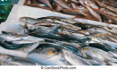 Showcase with Fresh Sea Fish in Ice on the Street Market....