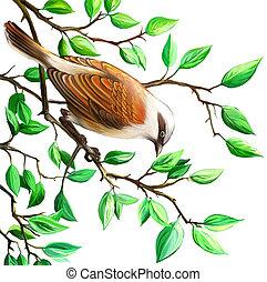 Shrike. Bird on the tree branch. Isolated realistic illustration on white background