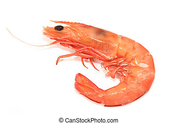 Shrimp ~ a single cooked king prawn, isolated on white with...