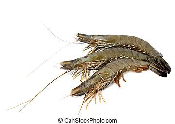 shrimp big raw isolated on white background