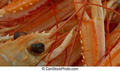 Shrimp with eyes lying in group. Expensive seafood for culinary background.