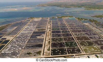 shrimp farming in indonesia - shrimp farm, prawn farming...