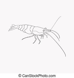 Shrimp icon line element. Vector illustration of shrimp icon line isolated on clean background for your web mobile app logo design.