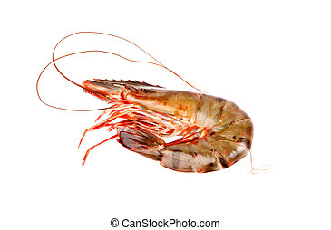 shrimp in isolated on white background