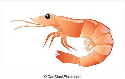 Shrimp isolated - A shrimp isolated on white background....