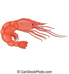 Shrimp isolated on a white background. Vector graphics.