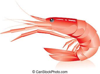shrimp on a white background