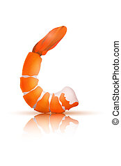 Shrimp on a white background. Vector illustration