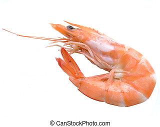 Single shrimp over white background