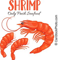 Shrimp vector illustration in cartoon style.