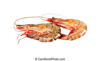 shrimps in isolated on white background