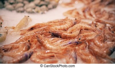 Shrimps on ice. Seafood market stall - Shrimps on ice,...