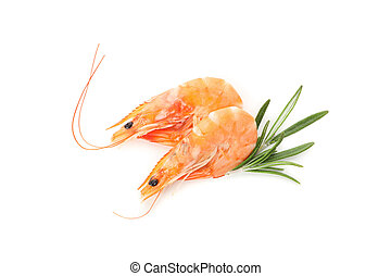 Shrimps with rosemary isolated on white background