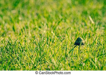 Small shroom in fresh green grass