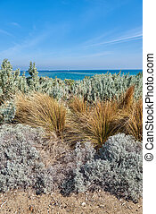Shrub and grass on the beach against a background of turquoise blue ocean and sky