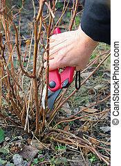 shrub cutting 07