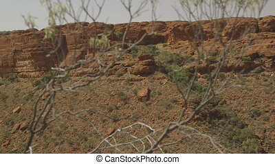 Shrub with thin stalks and branches, Kings Canyon - Extreme...