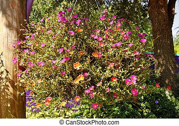 Shrubby Purslane flowers